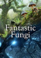 Search netflix Fantastic Fungi